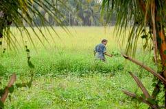 Ipomea tailandese del raccolto di 60 anni dell'uomo anziano Fotografie Stock Libere da Diritti