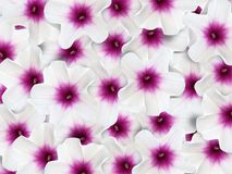 Ipomoea aquatica flower pattern background Stock Photo