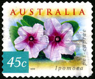 Ipomoea-Blumen-australische Briefmarke Stockfotos