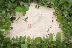Ipomoea Pes-caprae Anlagen- oder Ziege Fuß-Kriechpflanze mit der Flasche Stockfotografie