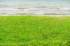 Ipomoea pes-caprae on beach Royalty Free Stock Photography