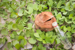 Ipomoea pes-caprae plant or Goat's Foot Creeper with the bottle Stock Image