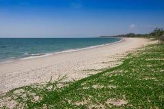 Ipomoea pes-caprae on white sand beach. Ipomoea pes-caprae on white sand beach stock photography