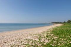 Ipomoea pes-caprae. On white sand beach Stock Photos