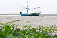 Ipomoea plant on the beach. Ipomoea on the beach with a fish boat stock photography