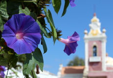 Ipomoea purpurea flower and Palace of Estoi chapel in background Stock Images