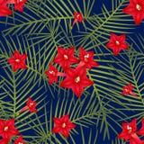 Ipomoea Quamoclit - Cypress Vine Flower on Navy Blue Background. Vector Illustration. royalty free illustration