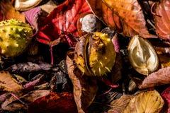 Ippocastani e Autumn Leaves, Oxford Regno Unito Fotografia Stock Libera da Diritti
