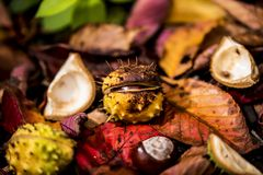 Ippocastani e Autumn Leaves, Oxford Regno Unito Immagine Stock