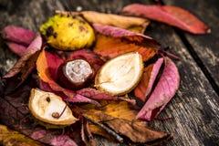 Ippocastani e Autumn Leaves, Oxford Regno Unito Fotografie Stock