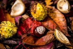 Ippocastani e Autumn Leaves, Oxford Regno Unito Fotografia Stock