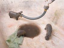 Ippopotami dell'animale del giocattolo Fotografia Stock Libera da Diritti
