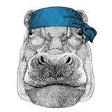 Ippopotamo, ippopotamo, colosso, bandana dell'animale selvatico del fiume-cavallo o bandana o immagine d'uso del bandanna per il  Immagine Stock Libera da Diritti