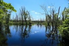 Ipswich rzeka Zdjęcia Royalty Free