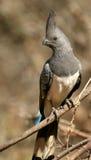 ir-afastado-pássaro Branco-inchado Imagens de Stock