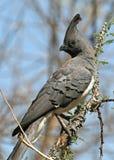 ir-afastado-pássaro Branco-inchado Fotos de Stock Royalty Free