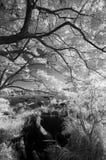 IR landscape Royalty Free Stock Photography