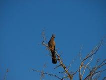 Ir-lejos-pájaro gris fotografía de archivo libre de regalías