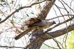 Ir-lejos-pájaro gris Foto de archivo libre de regalías
