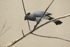 ir-lejos-pájaro Blanco-hecho bolso Fotografía de archivo