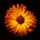 IR macro shot. Took with ir filter on macro Stock Photo