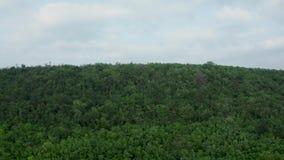 Ir tiro aéreo acima da floresta densa video estoque