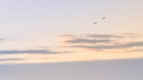 Ir volando junto Imagen de archivo libre de regalías