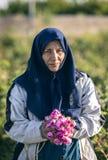 Irańska dama w różanej plantacji, podnosi różanych płatki w wczesnym poranku obraz stock