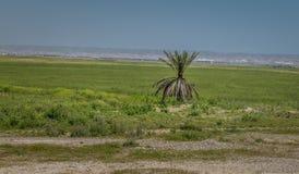 Iraaks landschap in de zomer stock foto's