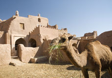 Iran oasis adobe traditional architecture. Iran garmeh oasis adobe iranian traditional architecture camel desert home house Royalty Free Stock Images