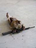 Iran's secret soldier. Monkey crawling with a sub-machine gun Royalty Free Stock Images