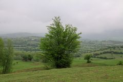 Iranian landscape in Gilan region with green grass plains and trees royalty free stock photos