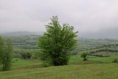 Iranskt landskap i den Gilan regionen med slättar och träd för grönt gräs royaltyfria foton