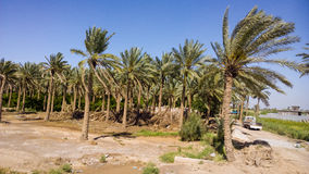 Iraqi countryside Stock Image