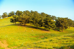 Iraqi landscape in spring Royalty Free Stock Photos