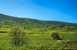 Iraqi Landscape in Spring Stock Images