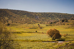 Iraqi Landscape in Spring Royalty Free Stock Image