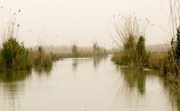 Iraqi Marshlands Stock Photo