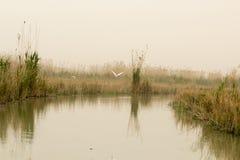 Iraqi Marshlands Royalty Free Stock Photos
