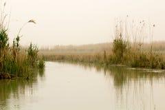 Iraqi Marshlands Stock Images