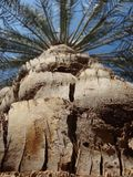 Palm tree down to top view royalty free stock photography