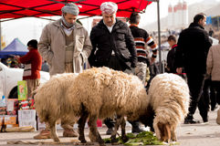 Iraqi Sheep Seller Royalty Free Stock Photography