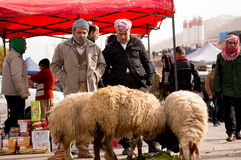 Iraqi Sheep Seller Stock Photos