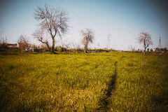 Iraqi village in Spring season Stock Photography