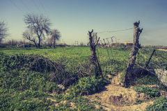 Iraqi Village in Spring Royalty Free Stock Image