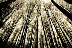 irati bukowa lasowa dżungla Navarre fotografia stock