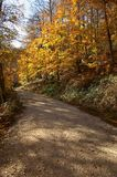 Irati Forest. Autumn Forest Irati Nature Yellow Brown Royalty Free Stock Photo