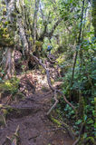 Irau mount hiker Royalty Free Stock Image