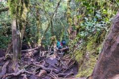 Irau mount hiker Royalty Free Stock Photo