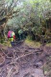 Irau mount hiker Stock Image